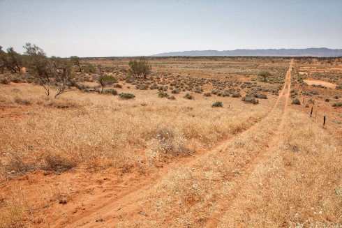 Wilkatana Sandhill Vista, looking eastwards towards the Flinders Ranges - photo by Tim Froling