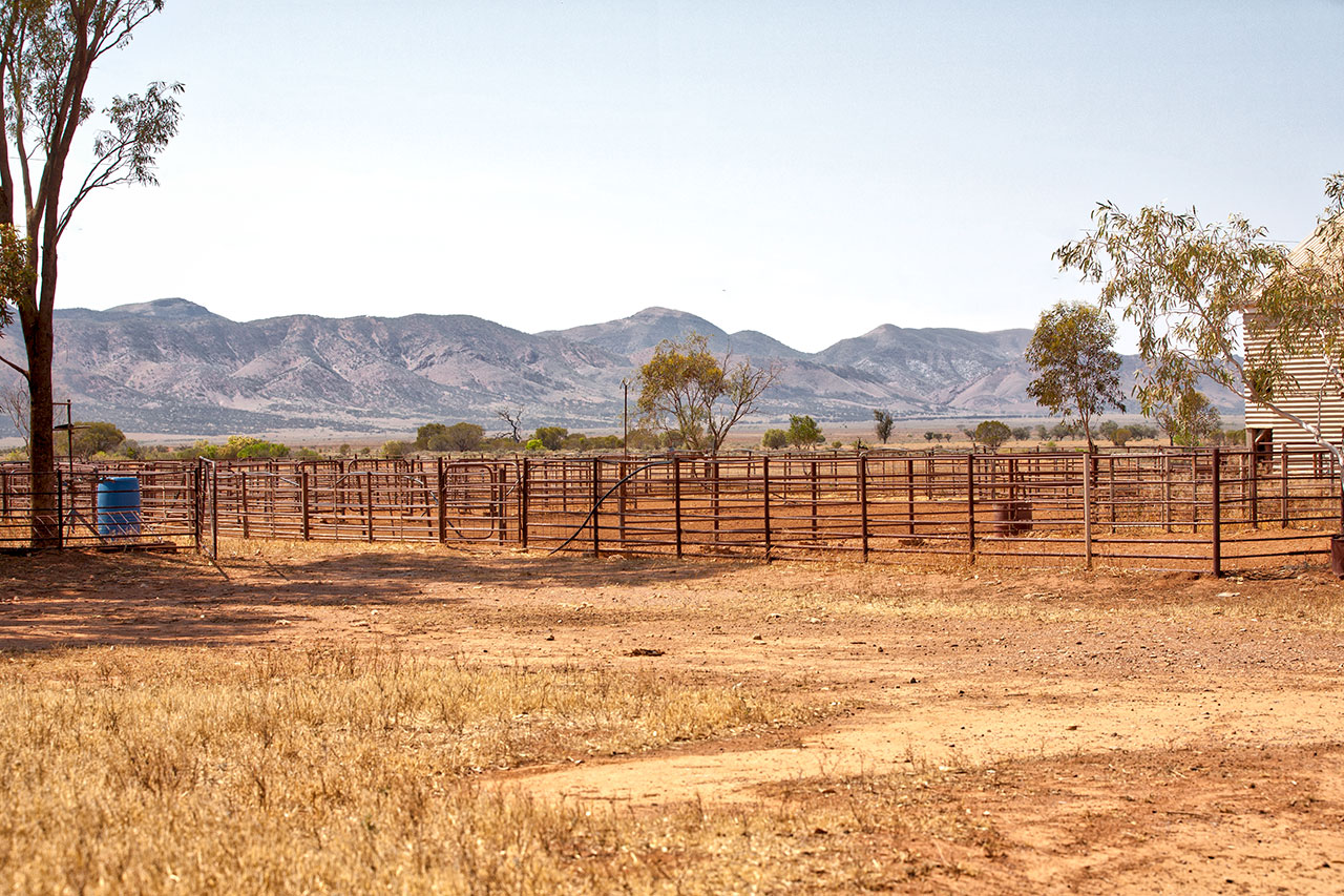 Wilkatana Woolshed Yards - photo by Tim Froling