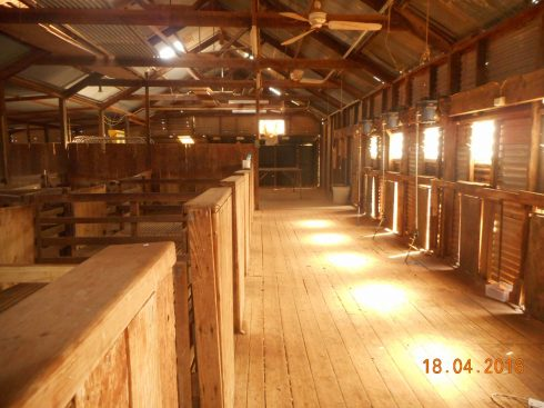 The wool shed